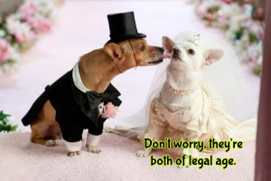 get ordained and perform animal weddings
